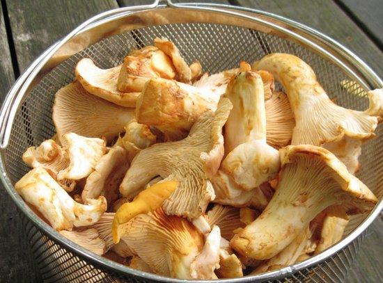 как чистить лисички грибы перед жаркой